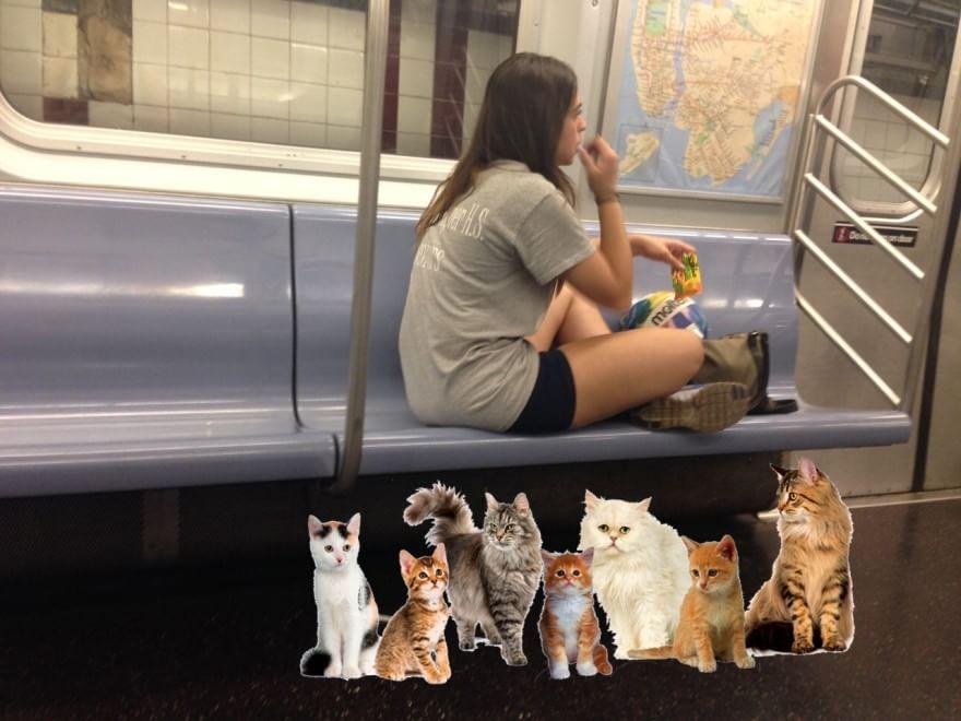 gattini contro la maleducazione